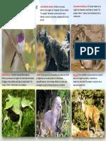 Animales en Extincion Chile