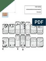 Anatomia Dento Maxilo Mandibular