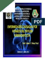 BASIDIOMYCETES_2010
