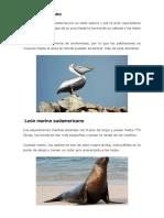 Pelícano peruano