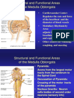 structural and functional areas of the brain.ppt
