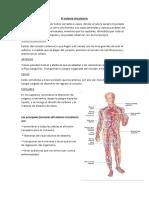 El sistema circulatorio.docx