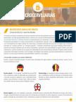 microcervejarias no Brasil - caracteristicas e oportunidades.pdf