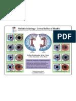 Iridiagnosis-Iridology-Chart-1.pdf