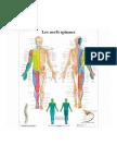VR2621L_01_3200_3200_Les-nerfs-spinaux.pdf