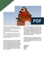 Selber Schmetterling züchten.pdf