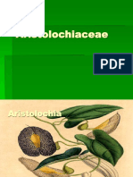 Aristolochia Notes