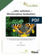 Schmetterling_Tagfalter_aufziehen__Metamorphose_beobachten.pdf
