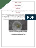 Reporte de ciencias naturales( crecimiento de planta).doc
