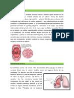 Celulas y Membranas Del Cuerpo Humano