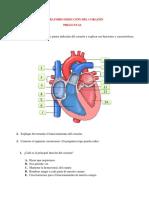 Laboratorio Disección Del Corazón