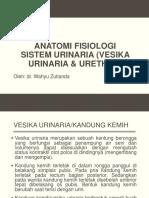 Anatomi Fisiologi Sistem Urinaria (Vesika Urinaria & Ureter)