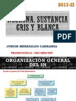 01 Neurona. Sustancia Gris y Blanca PDF