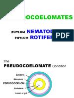 5 Pseudocoelomates
