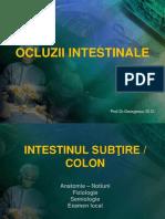 Ocluziile intestinale.pptx