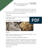 Rocas Sedimentarias y Metamórficas