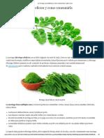 La Moringa, Sus Beneficios y Como Consumirla _ Cubiro