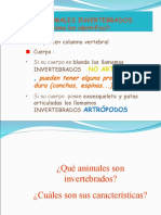 INVERTEBRADOS 2