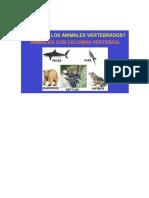 Cuadros de Animales Vertebrados e Invertebrados