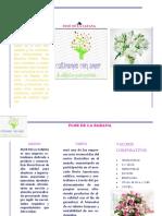 FLOR DE LA SABANA.pdf