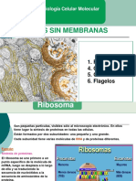 4ta Ribosomas Centrosomas Cilios Flagelos