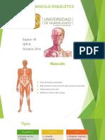 Sistema Muscular y Esquelético