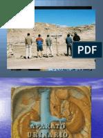 Osmorregulación -Sistema Renal.pdf