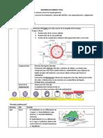 DESARROLLO EMBRIOFETAL resumen