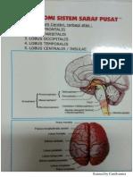 anatomi ssp.pdf