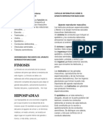Características Del Sistema Reproductor Masculino