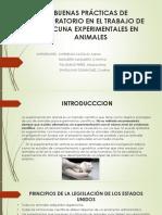 VACUNA EXPERIMENTALES EN ANIMALES