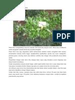 tanaman obat.docx