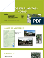 Hongos en Plantas - Hojas
