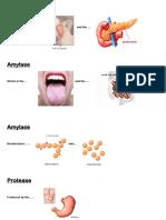 Enzymes Info Hunt