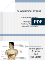 The Abdominal Organs (2).ppt
