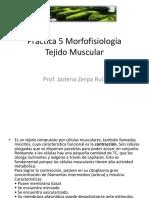 Practica 5 Morfofisiología T.muscular