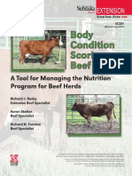 Cattle Body Condition