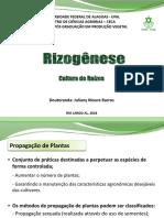 Cultura de Tecidos Rizogênese APRESENTAÇÃO
