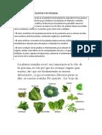 Importancia de Las Plantas y Su Utilidad