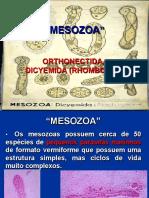9 Apresentação Mesozoa