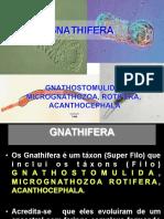 20 Apresentação Gnathostomulida