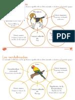 Caracteristicas de Los Animales Vertebrados Hoja Informativa