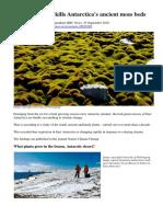 Climate Change Kills Antarctica's mosses