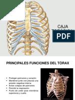 Guia Anatomia Humana i 09 10