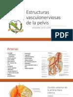 Estructuras Vasculonerviosas de La Pelvis