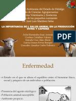 La Importancia de l Salud Animal en La Producción Ovina y Caprina