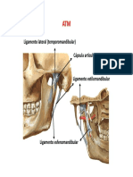 musculos face