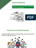 Espermatogénese-PP.pdf