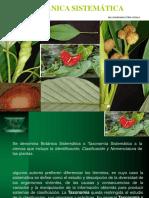 112746058-Botanica-Sistematica.pptx