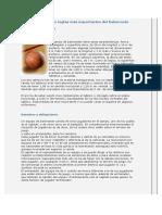 Resumen de las reglas más importantes del baloncesto